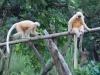 guwahati-zoo-2