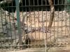 guwahati-zoo