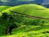 india-famous-tourist-places-kerala-tea-garden