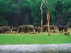 periyar-wildlife-sanctuary-thekkady