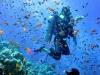 under-water-dive