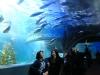 melbourne-aquarium