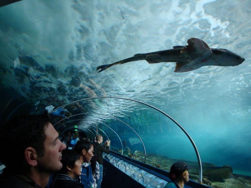 Тоннель проходит через все зоны аквариума: речную, морскую и акулью