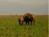 elephant-jim-corbett-nation.jpg