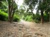 raod-internal-of-jim-corbett-national-park