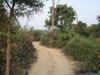 raod-of-jim-corbett-national-park