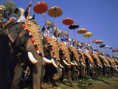 The Great Elephant March